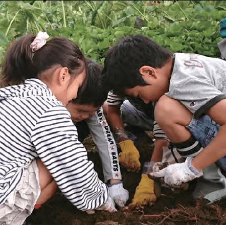 農作業を体験する子供達の写真