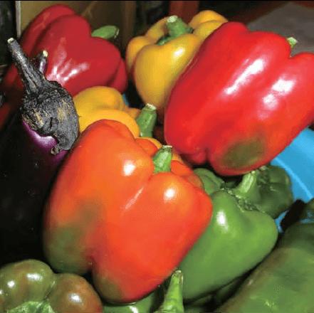 農作物:茄子とピーマン