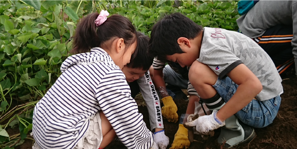 農作業を体験する子供達