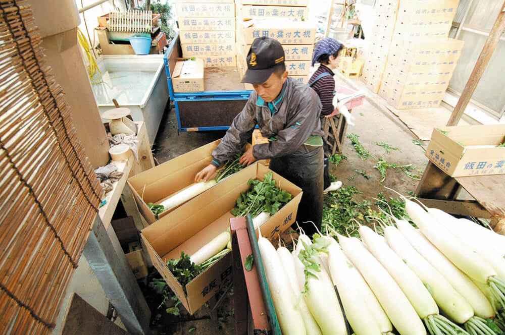 飯田の葉付大根の箱詰め作業