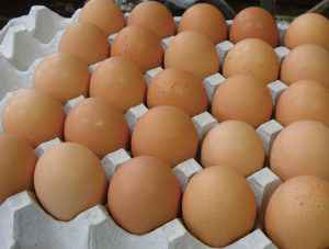 大矢養鶏の卵
