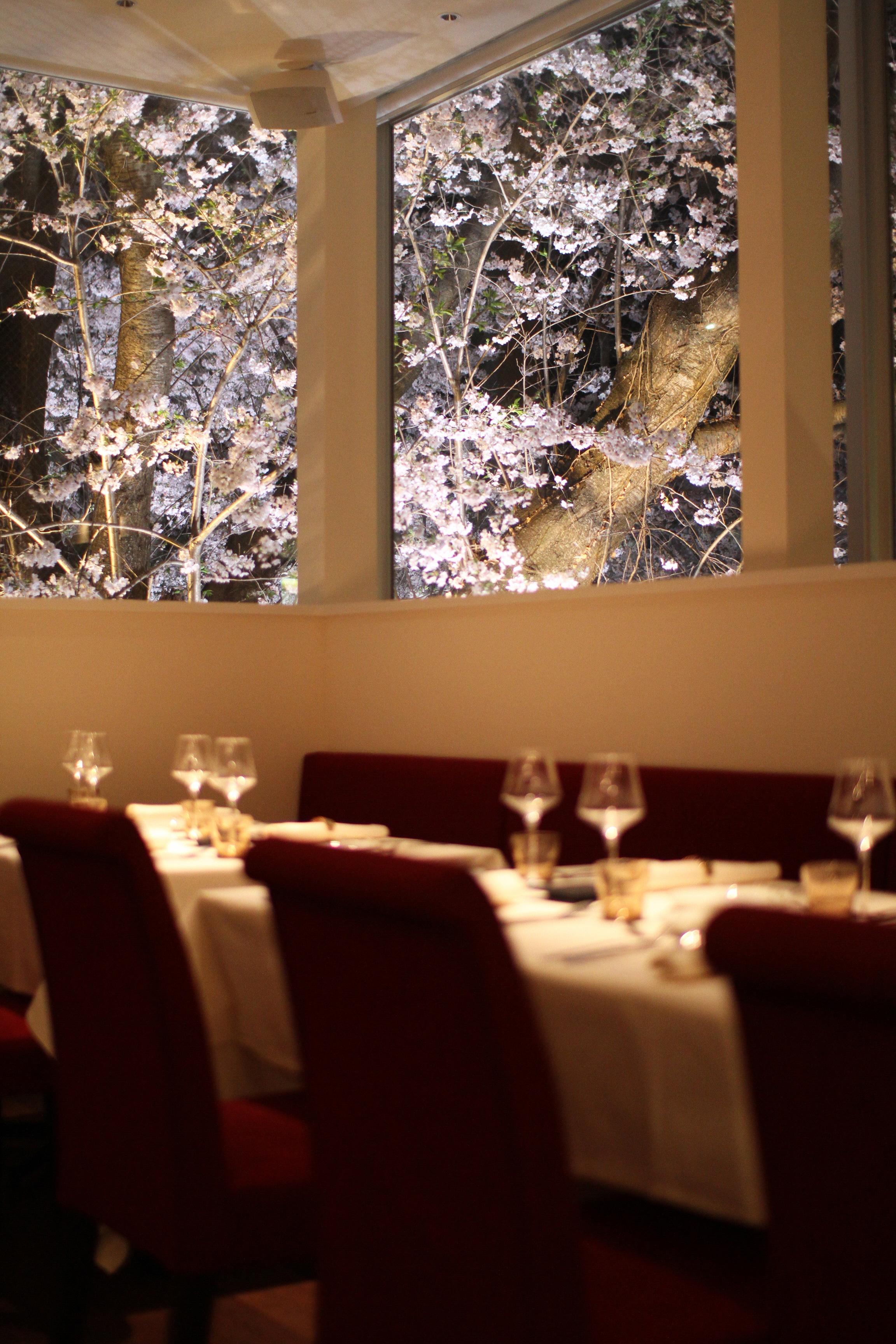 写真:レストラン ペタル ドゥ サクラ 1